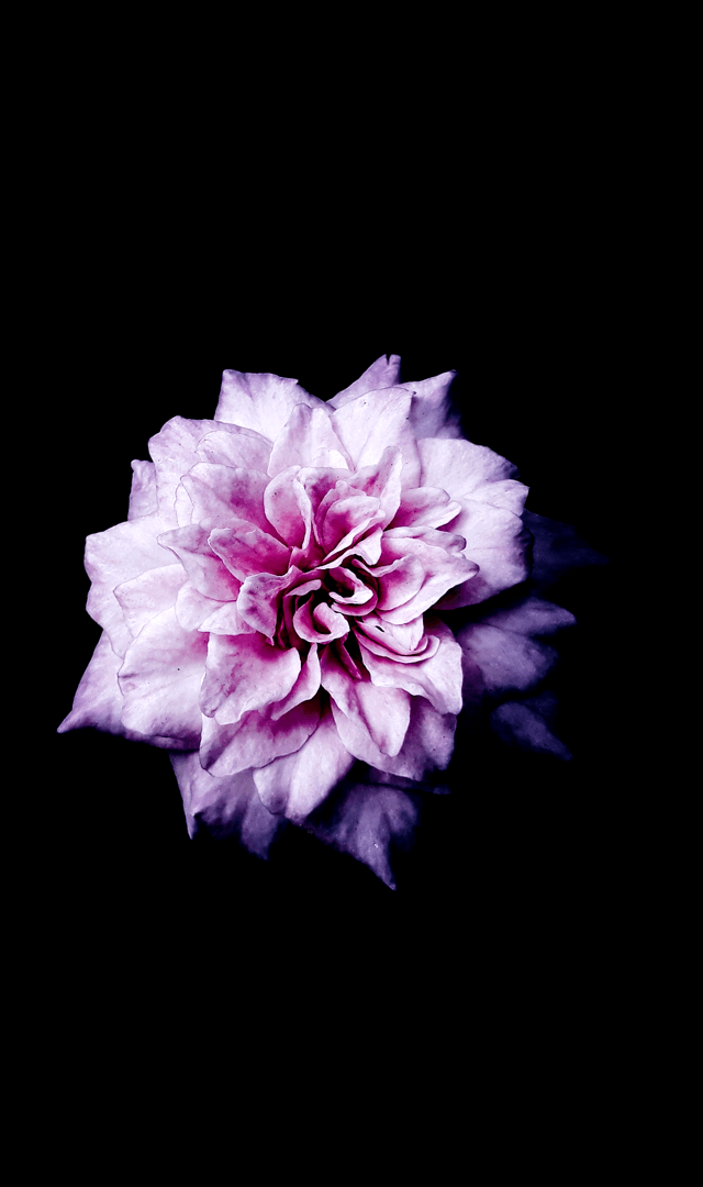 Flowers-5-1.png